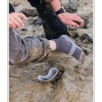 Un enfant perd sa botte dans la boue. Carottage dans le marigot et découverte du vers Néreis (verrouille). Balade pour les petits pieds (10 à 12 ans) organisée par le Festival de l'oiseau et animée par un guide nature. Les enfants explorent la laisse de mer, réalisent des carottage dans les marigots pour y trouver les vers et sont sensibilisés au problème de l'ensablement de la Baie de Somme. Saison : Printemps - Lieu : Plages de la Maye, Baie de Somme, Le Crotoy, Somme, Picardie