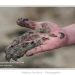 Carottage dans le marigot et découverte du vers Néreis (verrouille). Balade pour les petits pieds (10 à 12 ans) organisée par le Festival de l'oiseau et animée par un guide nature. Les enfants explorent la laisse de mer, réalisent des carottage dans les marigots pour y trouver les vers et sont sensibilisés au problème de l'ensablement de la Baie de Somme. Saison : Printemps - Lieu : Plages de la Maye, Baie de Somme, Le Crotoy, Somme, Picardie