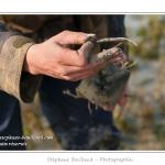 Carottage et présentation des racines (rhizomes) de la spartine de townsend aux enfants. Sensibilisation au rôle de cette plante colonisatrice dans l'ensablement de la baie. Balade pour les petits pieds (10 à 12 ans) organisée par le Festival de l'oiseau et animée par un guide nature. Les enfants explorent la laisse de mer, réalisent des carottage dans les marigots pour y trouver les vers et sont sensibilisés au problème de l'ensablement de la Baie de Somme. Saison : Printemps - Lieu : Plages de la Maye, Baie de Somme, Le Crotoy, Somme, Picardie