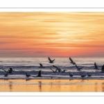 La plage de Quend-Plage (Côte Picarde) au crépuscule