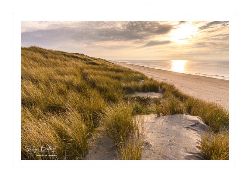Les dunes de Quend-plage couvertes d'oyats