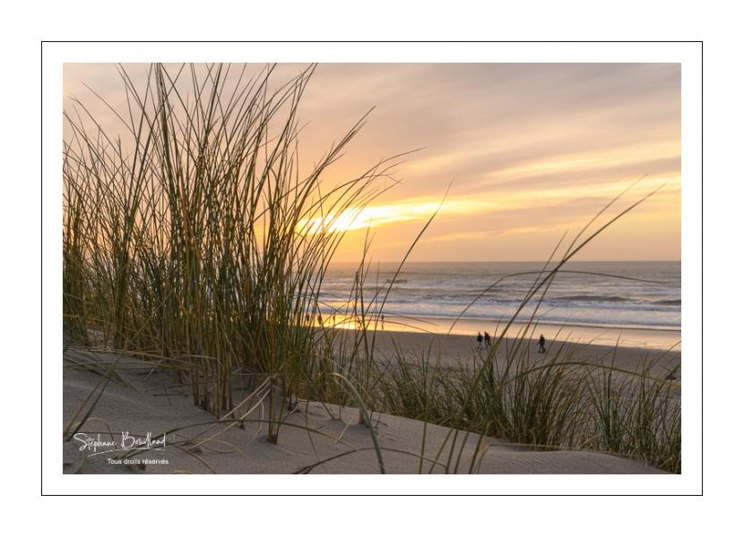 Les dunes du Marquenterre entre Fort-Mahon et la Baie d'Authie au soleil couchant