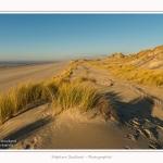 Quend_Plage_dunes_15_02_2015_003-border.jpg