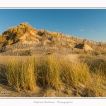 Quend_Plage_dunes_15_02_2015_008-border.jpg