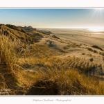 Quend_Plage_dunes_15_02_2015_016-border.jpg