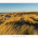 Quend_Plage_dunes_15_02_2015_017-border.jpg