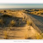 Quend_Plage_dunes_15_02_2015_022-border.jpg