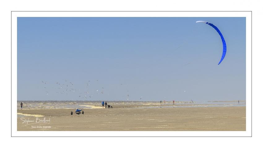 Char-à-cerf-volant sur la plage