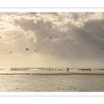 Promeneurs sur la plage près des alignements de bouchots