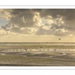 Goélands sur la plage