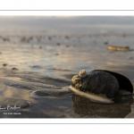 Coquillages sur la plage au soir