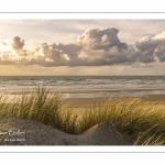 Les dunes du Marquenterre en fin de journée