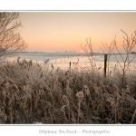 Les renclôtures sont les terres gagnées sur la mer (polder), protégées par la digue qui entourre la baie. Ici, en pleine vague de froid, les étangs sont gelés et les arbres et les roseaux sont couverts de givre. Saison : Hiver - Lieu : Baie de Somme, Somme, Picardie, France, Côte Picarde, Picardie Maritime