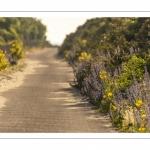 La route blanche, entre Cayeux et Le Hourdel