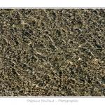 Reflets du soleil dans l'eau à marée basse sur la plage du Crotoy / Sun reflections in the water at low tide on the beach - Saison : Printemps - Lieu : Le Crotoy, Baie de Somme, Somme, Picardie, France - http://www.aquaticfortune.com/
