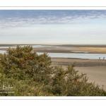 Argousiers dans les dunes au Hourdel