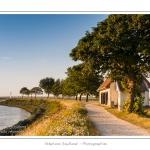 La jetée de Saint-Valery, face aux quais, avec sa lanterne et ses talus semés de jachère fleurie.  - Saison : été - Lieu : Saint-Valery-sur-Somme, Baie de Somme, Somme, Picardie, France