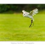St-Riquier-Medievale-Oiseaux_0011-border