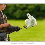 St-Riquier-Medievale-Oiseaux_0012-border