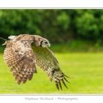 St-Riquier-Medievale-Oiseaux_0019-border