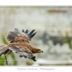 St-Riquier-Medievale-Oiseaux_0026-border