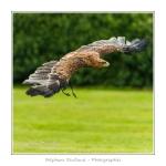 St-Riquier-Medievale-Oiseaux_0027-border