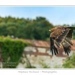 St-Riquier-Medievale-Oiseaux_0030-border