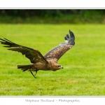 St-Riquier-Medievale-Oiseaux_0031-border