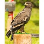 St-Riquier-Medievale-Oiseaux_0041-border