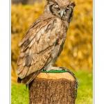 St-Riquier-Medievale-Oiseaux_0042-border