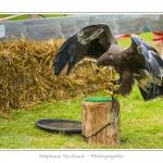 St-Riquier-Medievale-Oiseaux_0045-border