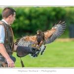 St-Riquier-Medievale-Oiseaux_0052-border