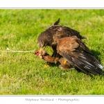 St-Riquier-Medievale-Oiseaux_0058-border