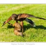 St-Riquier-Medievale-Oiseaux_0061-border