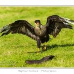 St-Riquier-Medievale-Oiseaux_0066-border