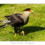 St-Riquier-Medievale-Oiseaux_0067-border