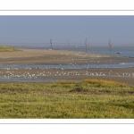 Les mollières du Cap Hornu en Baie de Somme