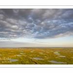 Les mollières de la baie de Somme en fond de baie