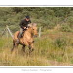 Chaque année à l'automne, une grande manifestation est organisée autour du cheval Henson, race créée en Baie de Somme. Les cavaliers de la région viennent et emènent le troupeau de juments et de poulains depuis le parc du Marquenterre jusqu'à Saint-Quentin-en-Tourmont où juments et poulains seront séparés. Saison : Automne - Lieu : Saint-Quentin-en-Tourmont, Baie de Somme, Somme, Picardie, France