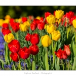 Tulipes_Saint-Quentin_18_04_2015_001-BorderMaker