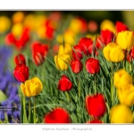 Tulipes_Saint-Quentin_18_04_2015_004-BorderMaker