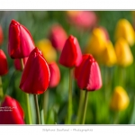 Tulipes_Saint-Quentin_18_04_2015_008-BorderMaker