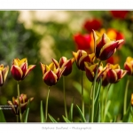 Tulipes_Saint-Quentin_18_04_2015_010-BorderMaker