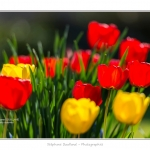 Tulipes_Saint-Quentin_18_04_2015_012-BorderMaker