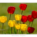 Tulipes_Saint-Quentin_18_04_2015_016-BorderMaker
