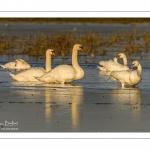 Vague de froid sur le marais du Crotoy