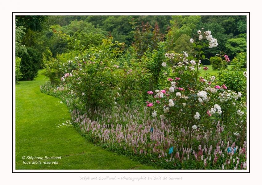 Roses_Valloires_18_06_2016_012-border