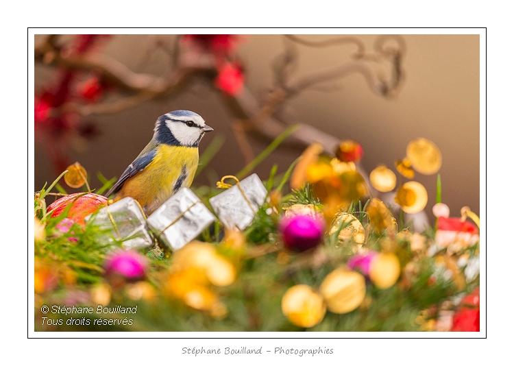 Oiseaux-Jardin-Noel-03-01-2013_002-border