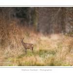 saison : hiver - Lieu : Forêt de Crécy, Marcheville, Somme, Picardie, France