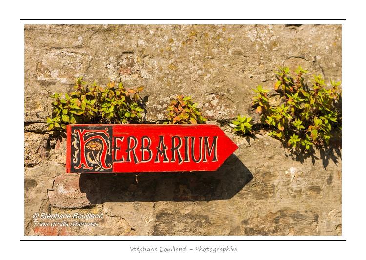 Saint_Valery_Herbarium_29_06_2013_120-border